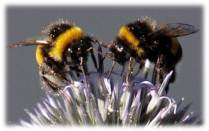 Picture bees